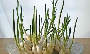 3 loại củ mọc mầm dưỡng chất tăng gấp bội, 4 loại khác tuyệt đối không được ăn kẻo ngộ độc